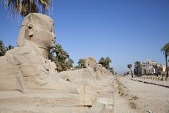 An avenue of Sphinx Stock Photos