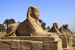 Avenue of Sphinxes Stock Images