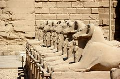The Avenue of The Sphinxes. Stock Image