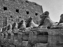 Avenue Of Sphinxes Stock Photography