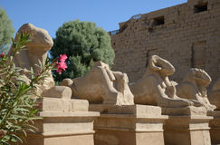 Avenue of sphinxes _ details Stock Photos