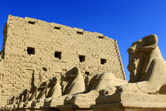 Avenue of Sphinxes Stock Image