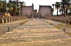 Avenue of Sphinxes between Karnak and Luxor Temples Stock Image