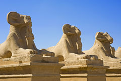 Avenue of sphinxes at Karnak temple. Ram sphinxes at the avenue of sphinxes in Karnak temple Stock Photography