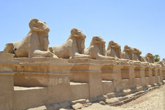Avenue of sphinxes at Karnak Temple Stock Image