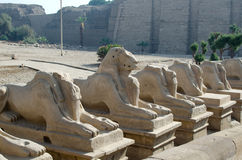 Avenue of sphinxes in the Precinct of Amun-Re  (Karnak Temple Complex, Luxor, Egypt) Royalty Free Stock Photography