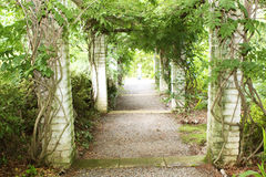 Avenue though vines Stock Image