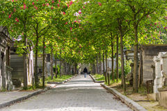 Avenue to the cemetery Royalty Free Stock Photography