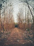 Avenue tree Stock Photography