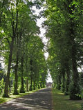 Avenue Of Trees 1. Path bordered by rows of trees Stock Photo