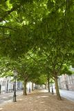 Avenue with trees Stock Images