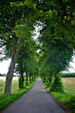 Avenue of trees. A country road diminishes in a green alley of trees Royalty Free Stock Photography