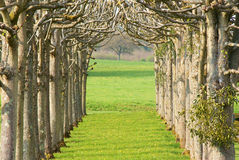 Avenue of trees Royalty Free Stock Images