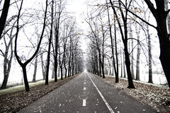 Avenue of trees Stock Photography