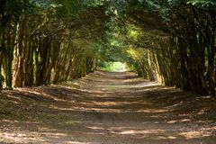 Avenue Of Trees Royalty Free Stock Photos