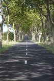 Avenue of trees. In Southern france royalty free stock photo