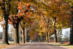 Avenue of trees across Royalty Free Stock Photo