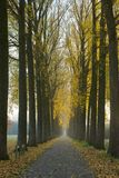 Avenue trees autumn Stock Image