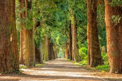 Avenue, Trees, Away, Walk, Green Royalty Free Stock Photos
