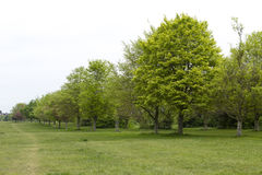 Avenue of trees,Bristol Stock Photography