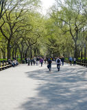 Avenue of Trees, Central Park Stock Photography