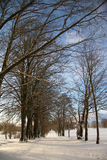 Avenue of trees in cold winter day under blue sky Royalty Free Stock Images