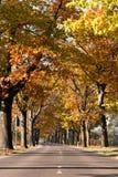 Avenue of trees on edge. Colorful autumn avenue of trees on edge of road Royalty Free Stock Images