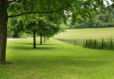 An Avenue of Trees in an English Park. Bordered by a meadow and woodland stock photos