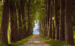 Avenue of trees, Lausanne Switzerland Stock Photography