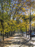 Avenue of trees, Lisbon, Portugal Royalty Free Stock Photography
