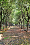 The avenue of trees in park Royalty Free Stock Image