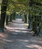 Avenue with trees in a park. Long avenue with trees inside a park stock photo