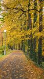 Avenue of trees in the parkin autumn Royalty Free Stock Images