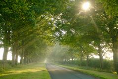 Avenue of trees. Royalty Free Stock Photography