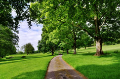 Avenue of trees with a road running through Stock Images