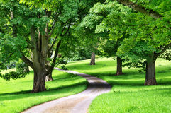 Avenue of trees with a road winding through Stock Images