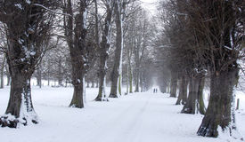 Avenue of Trees in Snow Stock Images