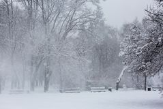 Avenue with trees during strong wind and snowstorm at winter in Moscow, Russia. Scenic view of a snowy city street royalty free stock image
