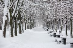 Avenue with trees during snowstorm at winter in Moscow, Russia. Scenic view of a snowy city street. Moscow snowfall royalty free stock photos