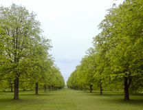Avenue of trees in Spring. Angelsey Abbey, Cambridgeshire, UK royalty free stock images