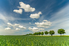 Avenue of trees on a spring field. Fields in Germany Stock Photo