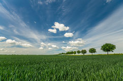 Avenue of trees on a spring field. Fields in Germany Royalty Free Stock Image