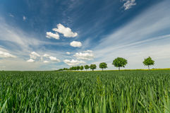 Avenue of trees on a spring field. Fields in Germany Royalty Free Stock Images