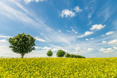 Avenue of trees on a spring field. Fields in Germany Stock Photos