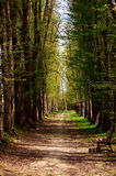Avenue of trees Royalty Free Stock Photography