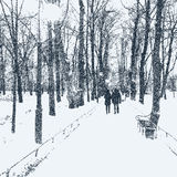 The avenue of trees in the winter park Royalty Free Stock Photos