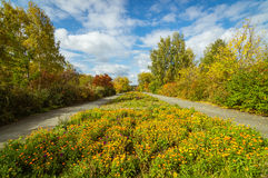 Avenue of victory in the Park in autumn, the town of Asbest, Russia Stock Image