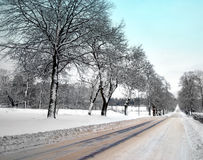 Avenue in winter Stock Photo