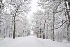 avenue winter Zdjęcie Stock