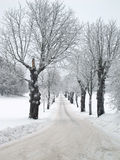 Avenue in winter Royalty Free Stock Photo
